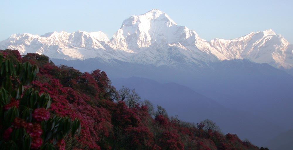 Ghorepani Poon Hill Trekking - Best Trekking Trails