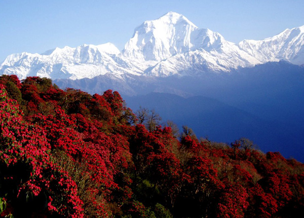 Spring season- best season to visit nepal